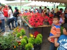 Diversidad de plantas se vendieron