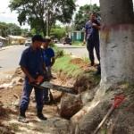Cuerpo de Bomberos realizar el corte de árboles.